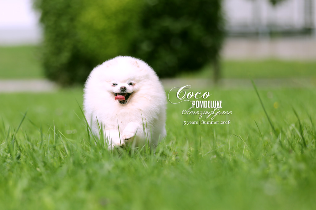 COCO_5 years_2