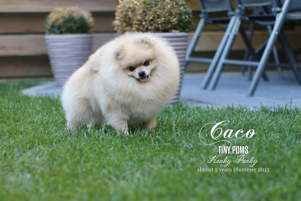 Caco_5 years