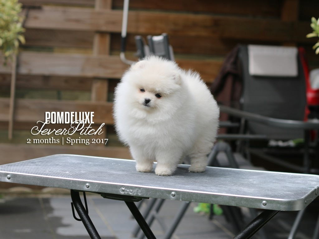 POMDELUXE FeverPitch_ 2months
