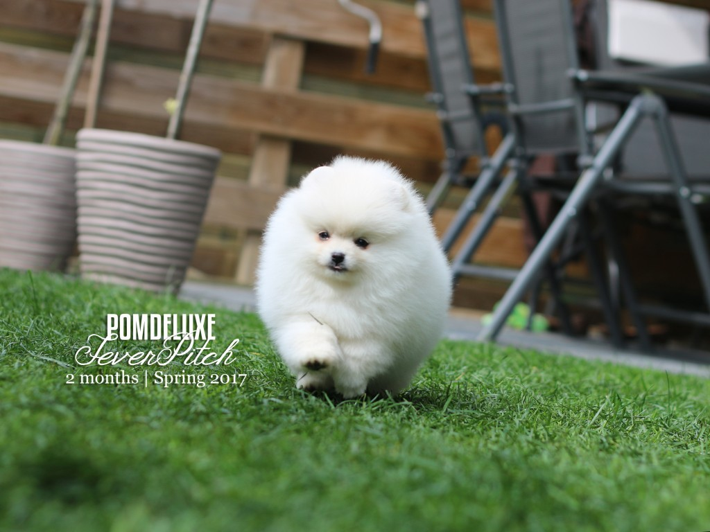 POMDELUXE FeverPitch_2months