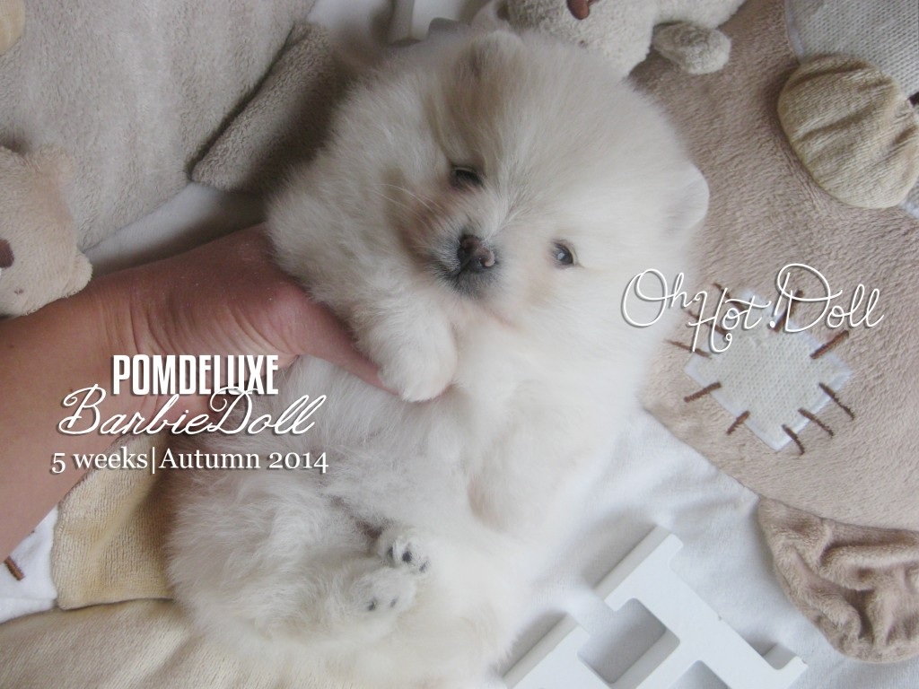 POMDELUXE barbie doll_5 weeks