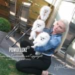 POMDELUXE puppies_10 weeks