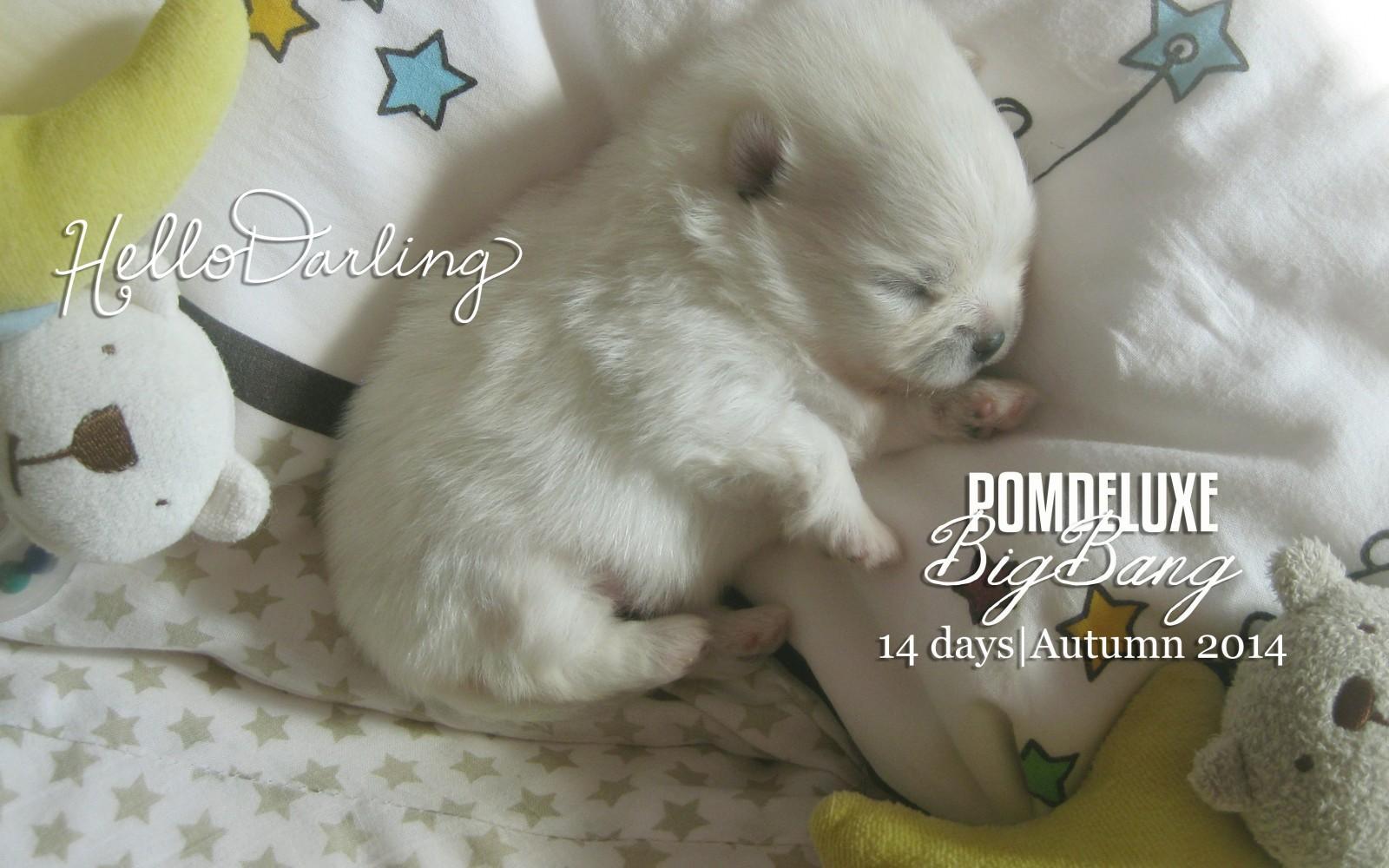 bigbang_14 days