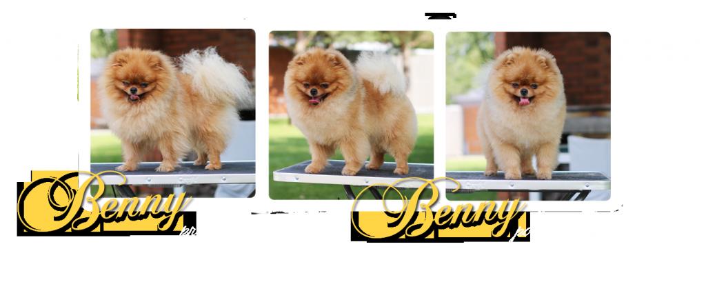 grooming Benni