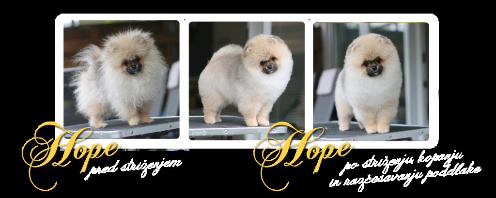 grooming HOPE