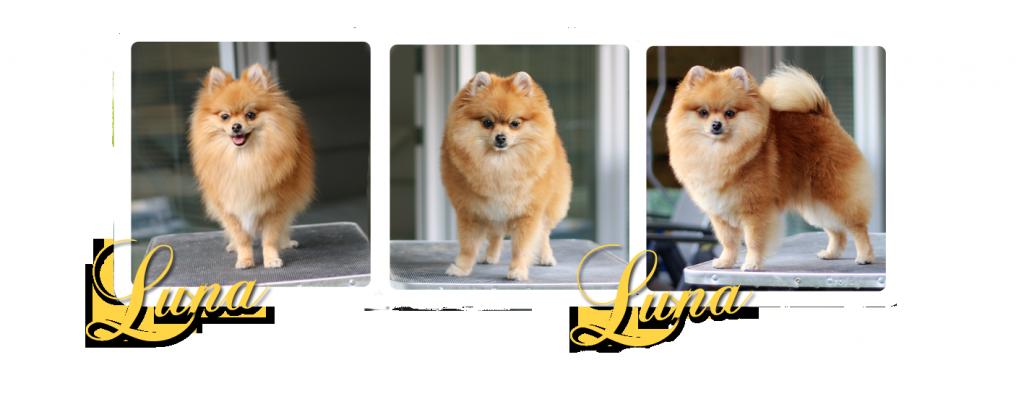 grooming Luna copy