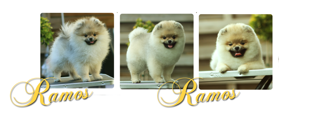 grooming RAMOSpdf