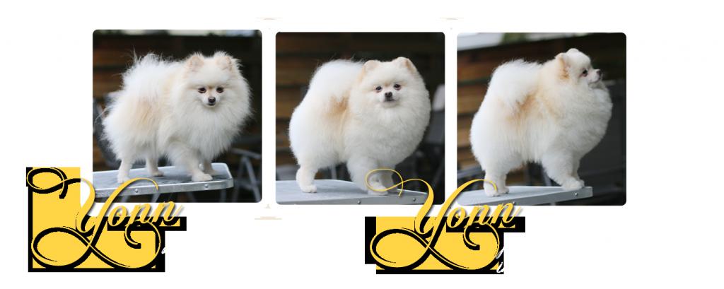 grooming YONN