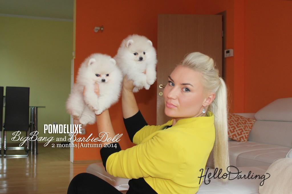 puppies_2months